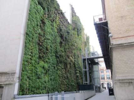 Rue_Alsace75010-Sylviedenogent-DIY_Mur_vegetal_Developpement_DurableDD_Recyclage (3)